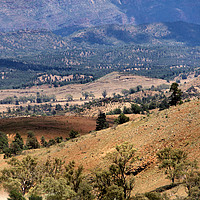 Buy canvas prints of Wilpena Pound, Flinders Ranges in the Spring by Carole-Anne Fooks