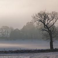 Buy canvas prints of Misty Tree by Jennifer Watson