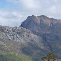 Buy canvas prints of Slioch and the pine tree by Jennifer Watson