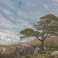 Buy canvas prints of The Lonesome Pine by Jennifer Watson