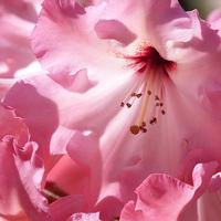 Buy canvas prints of Pretty in Pink by Jennifer Watson