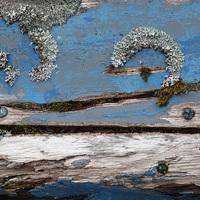 Buy canvas prints of Blue Lichen by Jennifer Watson