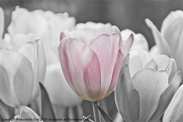 Hint of Pink Canvas print by Michelle Orai