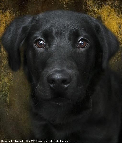 Black Lab Pup Canvas print by Michelle Orai