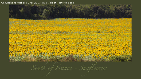 South of France Sunflowers Canvas print by Michelle Orai