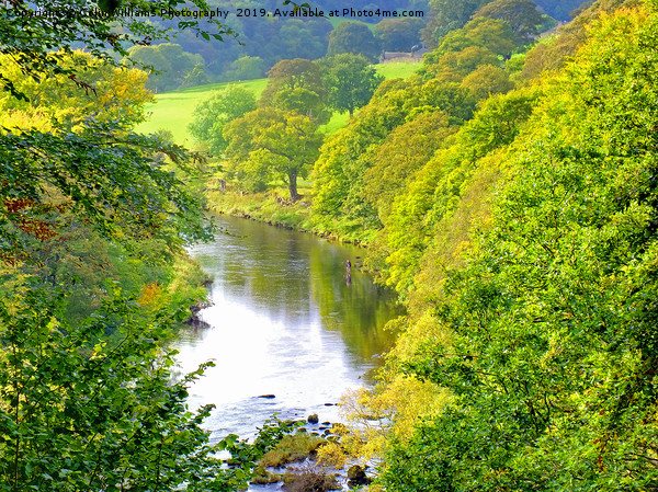 The River Wharfe Bolton Abbey - 2 Canvas print by Colin Williams Photography