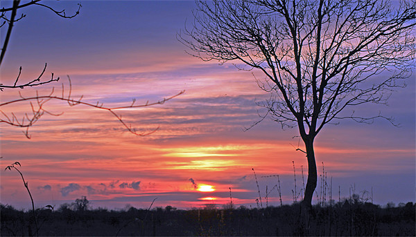 Countryside Sunset Canvas Print by Tony Murtagh