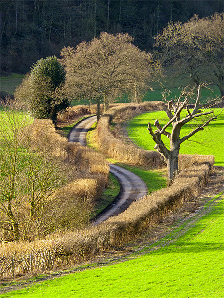 Winding Country Lane Canvas print by Tony Murtagh