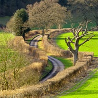 Buy canvas prints of Winding Country Lane by Tony Murtagh