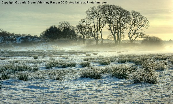 The Frozen Meadow Canvas Print by Jamie Green Voluntary Ranger