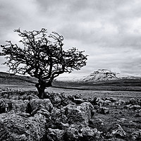 Buy canvas prints of The hardy tree by David McCulloch