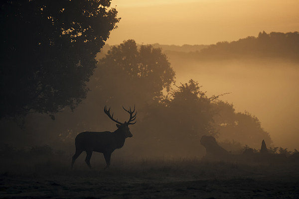Red Deer Stag Canvas print by Ian Hufton