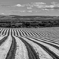 Buy canvas prints of Ayrshire Field by John Hastings