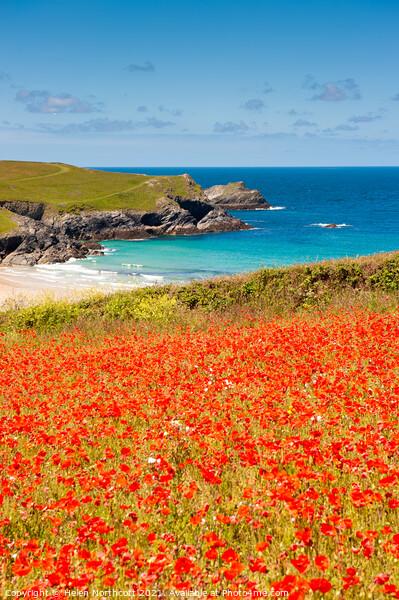 Cornish Poppy Fields iii Framed Print by Helen Northcott