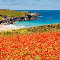 Buy canvas prints of Cornish Poppy Fields iii by Helen Northcott