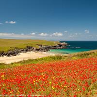 Buy canvas prints of Cornish Poppy Fields i by Helen Northcott