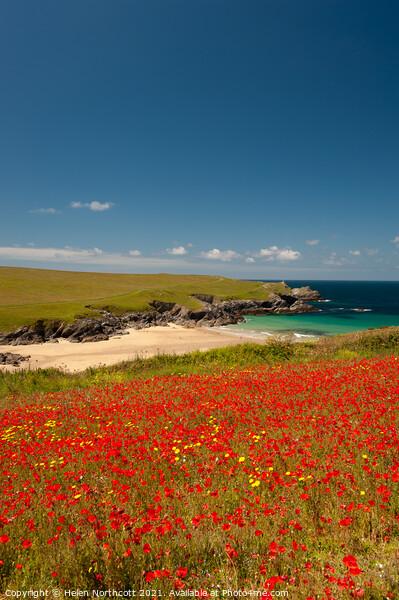 Cornish Poppy Fields ii Framed Print by Helen Northcott