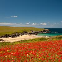 Buy canvas prints of Cornish Poppy Fields ii by Helen Northcott