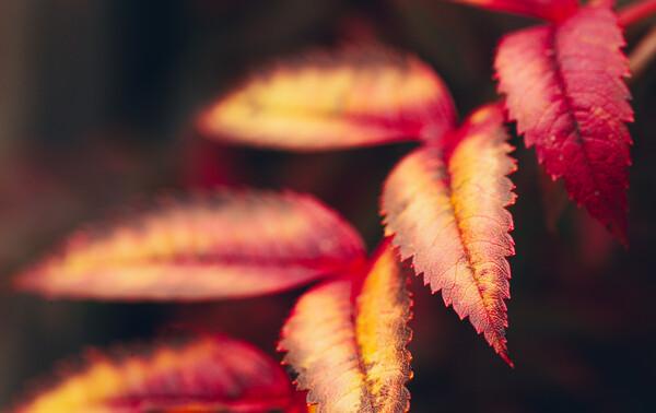 Autumn Abstract Canvas Print by Adam Payne