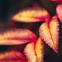 Buy canvas prints of Autumn Abstract by Adam Payne