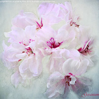 Buy canvas prints of Geranium by Fine art prints by Rina