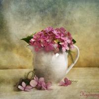 Buy canvas prints of Hydrangea by Fine art prints by Rina