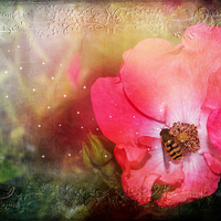 Buy canvas prints of  Nature by Fine art by Rina