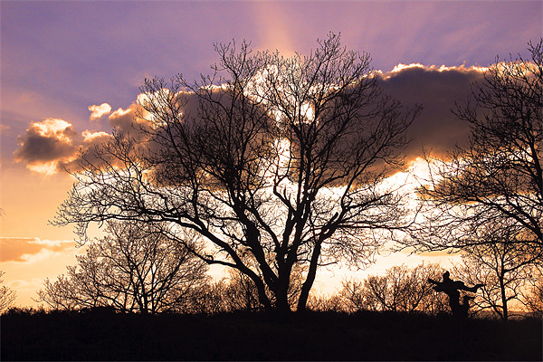 Surrey Hills Ballerina Sunset Canvas print by Kevin Warner