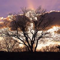 Buy canvas prints of Surrey Hills Ballerina Sunset by Kevin Warner
