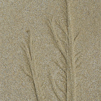 Buy canvas prints of Patterns in the Sand by Jayne Lloyd