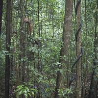 Buy canvas prints of Bukit Timah Nature Reserve Singapore by Jayne Lloyd