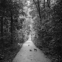 Buy canvas prints of Monkeys in Bukit Timah Nature Reserve by Jayne Lloyd