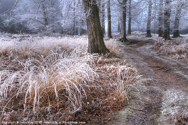 Forest frost Canvas print by John Kay