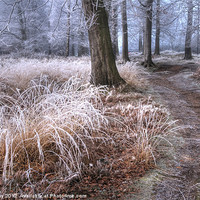Buy canvas prints of Forest frost by John Kay