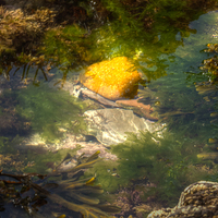 Buy canvas prints of  Rockpool by John Kay
