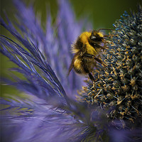 Buy canvas prints of Busy Bee! by Zoe Ferrie