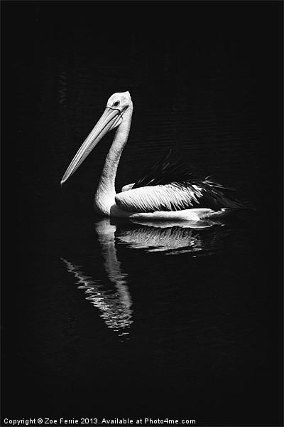 The Pelican Canvas print by Zoe Ferrie