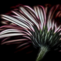 Buy canvas prints of Sometimes you have to look underneath! by Zoe Ferrie