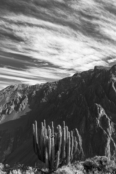 Colca canyon in the Andes, Peru Print by Phil Crean
