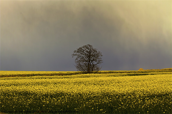 Stormy sky over rape field Canvas print by Jim Jones