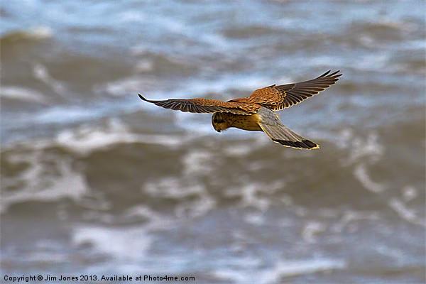 Kestrel hovering (Falco tinnulculus) Canvas print by Jim Jones