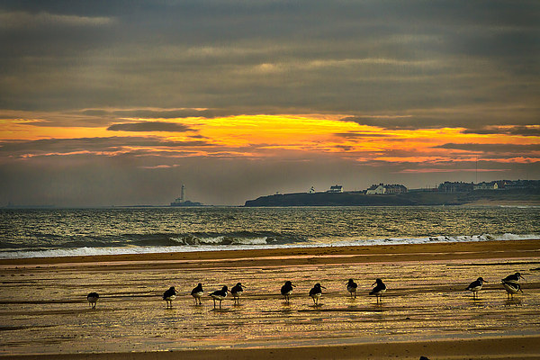 Oystercatchers on the beach Canvas print by Jim Jones