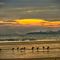 Buy canvas prints of Oystercatchers on the beach by Jim Jones
