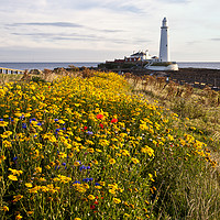 Buy canvas prints of Wild flowers and St Mary's Island by Jim Jones