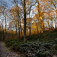 Buy canvas prints of Winter Woodland by Jim Jones
