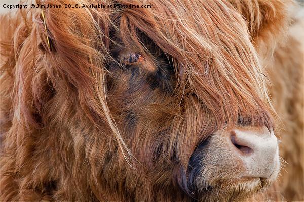 Highland Cow portrait Canvas print by Jim Jones