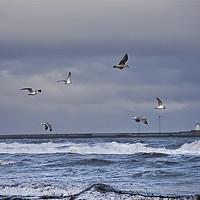 Buy canvas prints of Seagulls by Jim Jones