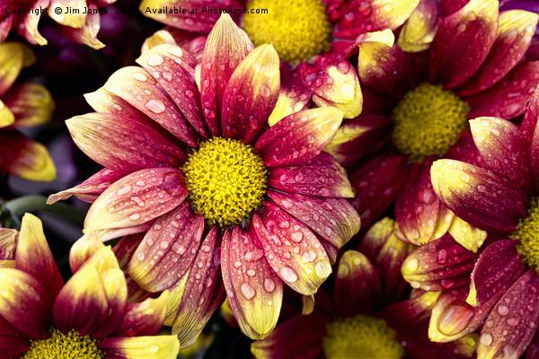 Flowers after showers Canvas print by Jim Jones