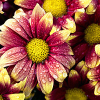 Buy canvas prints of Flowers after showers by Jim Jones