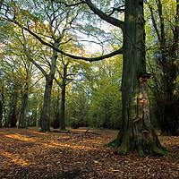 Buy canvas prints of Autumn Sunshine at High Gosforth Park by Jim Jones